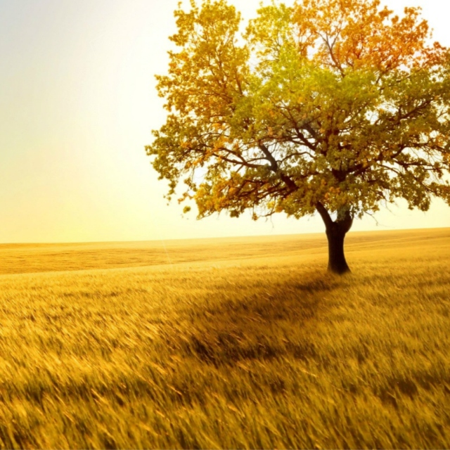 Nature-Golden-Sunset-Lonely-Tree-Grass-Field.jpg